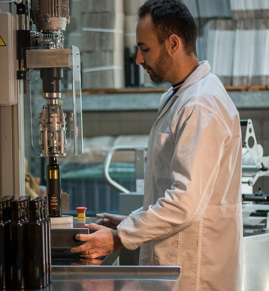 produzione olio d'oliva sardegna